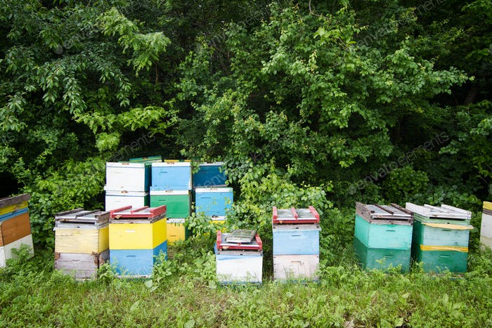 beehives by the edge of a green forest