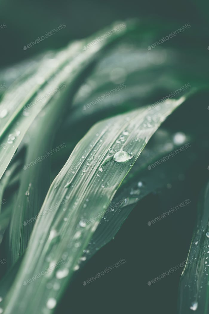 Macro photography of wet grass after rain. Moody toned.