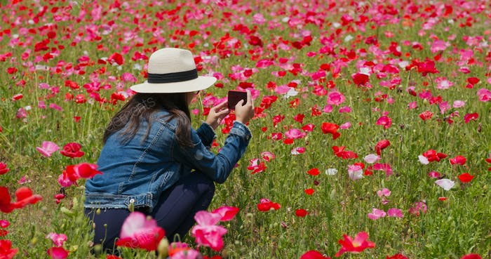 Woman take photo on cellphone inside poppy flower