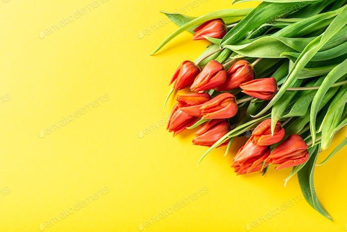 Orange tulips over yellow background