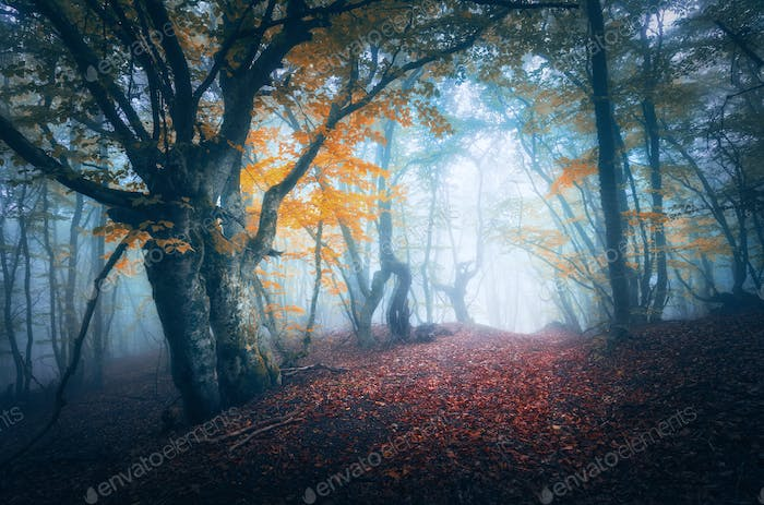 Dark fog forest. Mystical autumn forest with trail in blue fog
