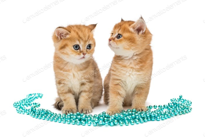 Two little ginger kitten and Christmas decorations