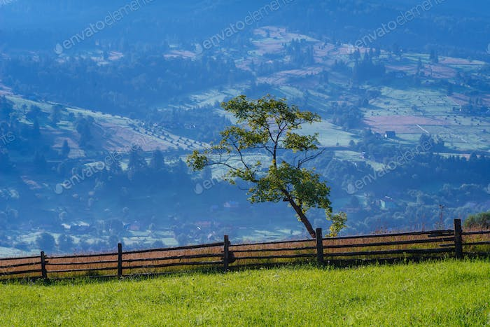 great summer pastures in the mountain