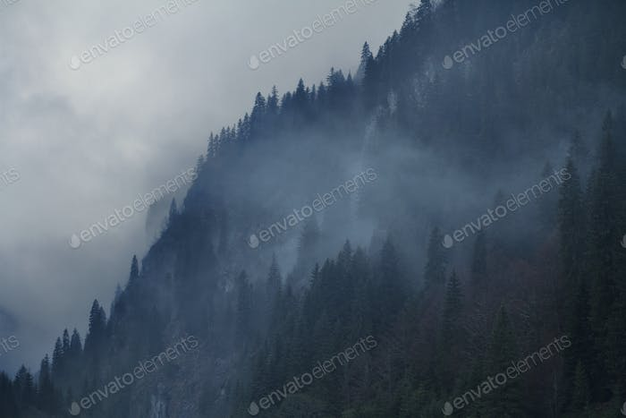 dark mountain side covered with trees and fog
