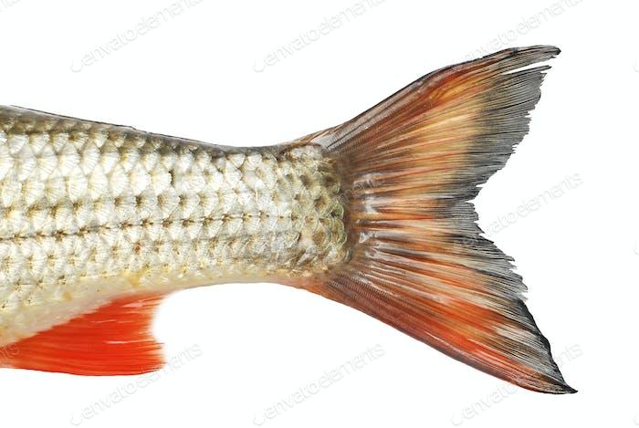 Fischmärchen