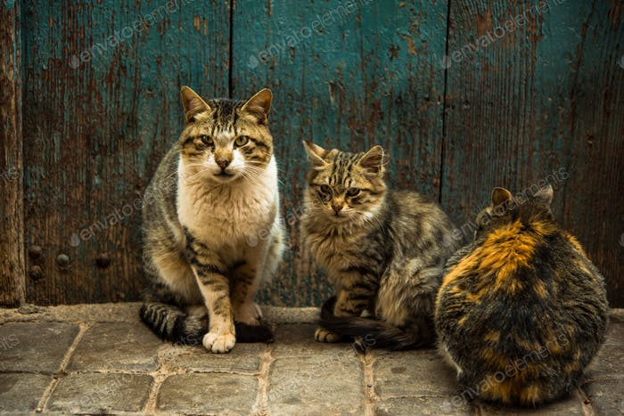Group of stray cats at front door in Morocco
