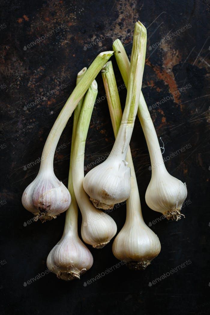 Garlic close up