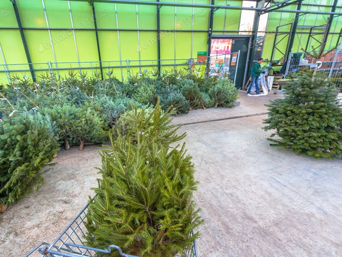 Christmas tree in cart at warehouse