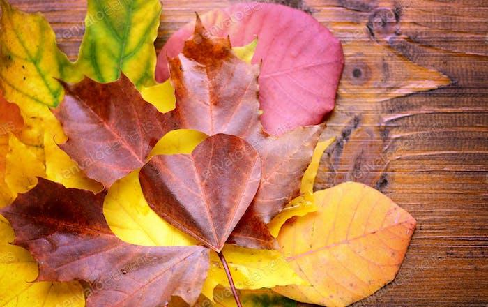 Autumn leaves. Autumn leaves heart. Autumn leaves over wooden ba