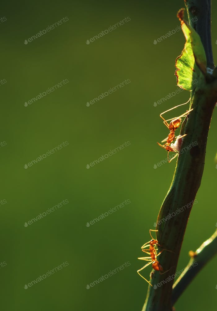 Close-up view of ant climbing on the stem