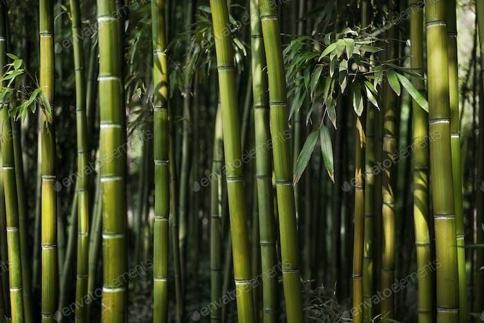 Chinese vegetation background