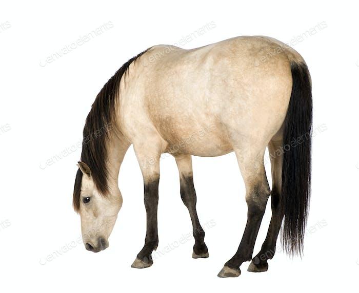 Pferdefreunde