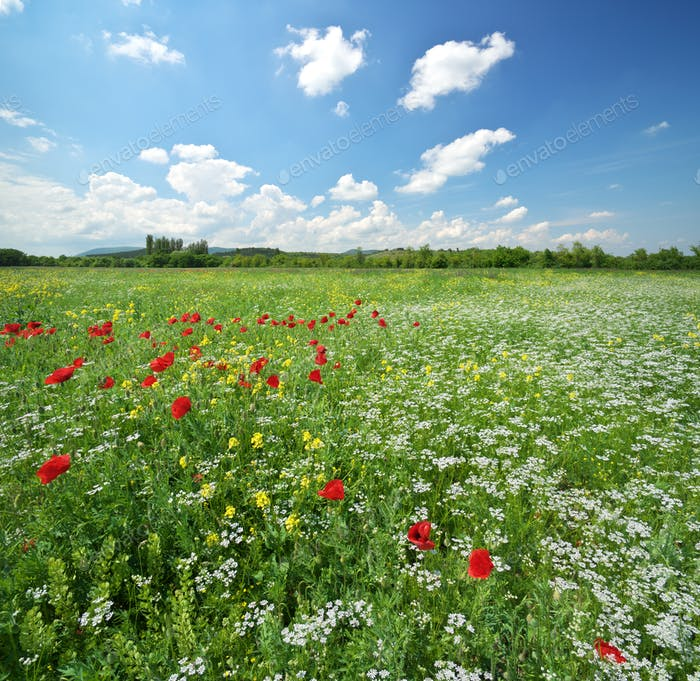 Spring meadow and beautiful flower at day.