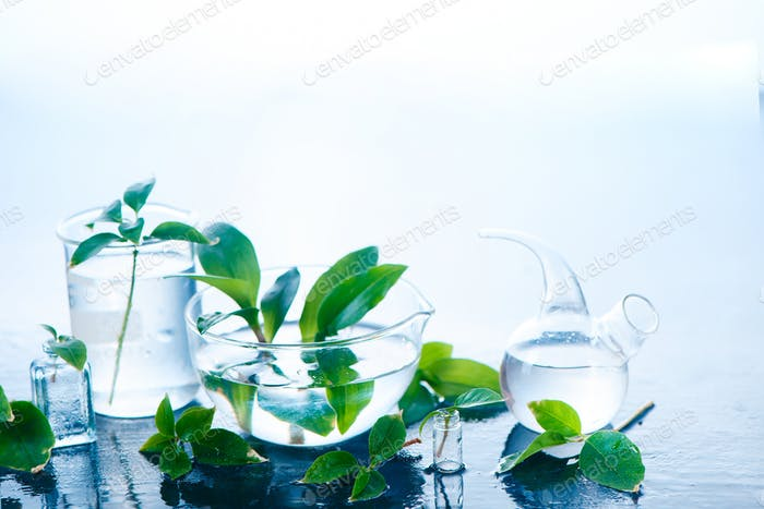 Medical plants in laboratory glassware header. Perfume and cosmetics natural concept with copy space