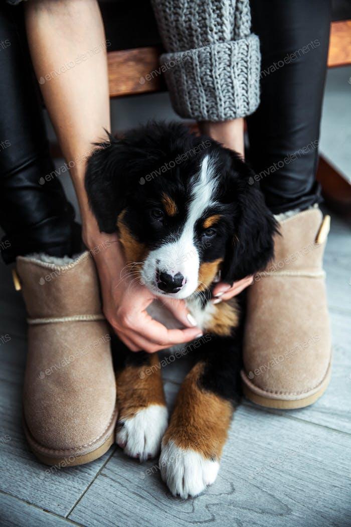 kleiner Welpe Berner Berghund auf den Händen des modischen Mädchens mit einer schönen Maniküre. Tiere