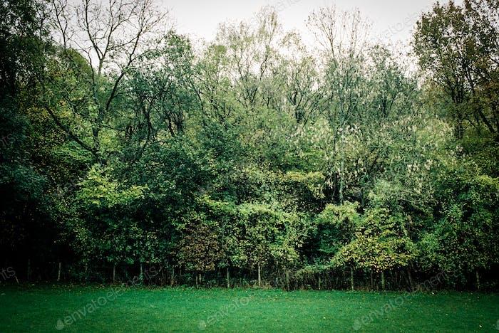 Muro de Árboles