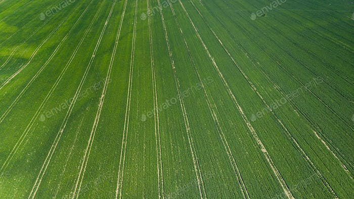 Green Fields at Early Spring Season in Agriculture Farming Industry. Aerial Drone view