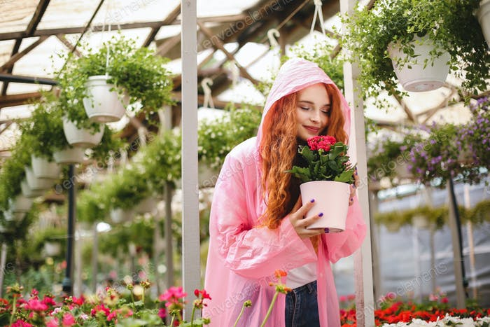 Beautiful lady with redhead curly hair standing in pink raincoat and dreamily smelling flower in pot