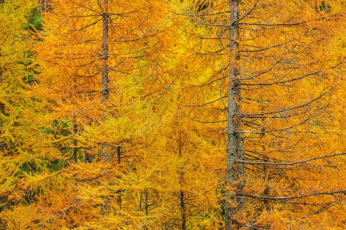 Fall Foliage Forest
