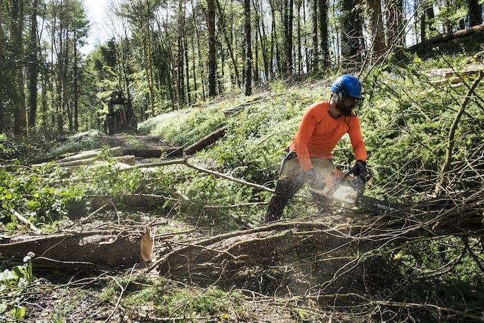 Mann trägt leuchtend orange Spitze Räumung Teil des Waldes. Schneiden Baumstamm mit Kettensäge.