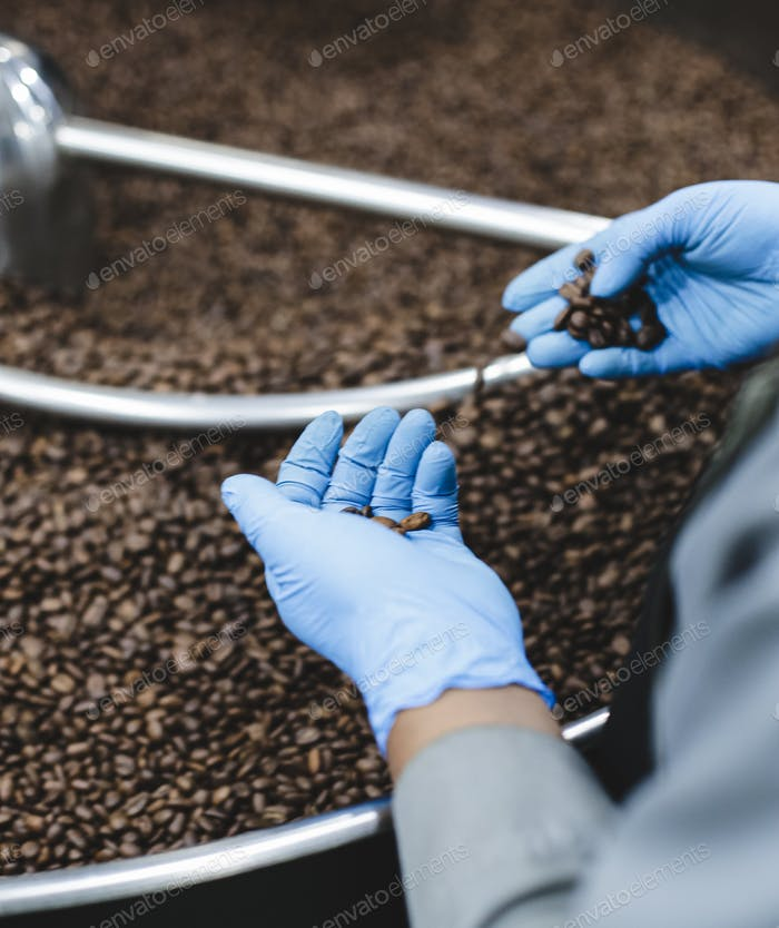 Man selecting fresh roasted coffee beans in modern coffee roasting machine
