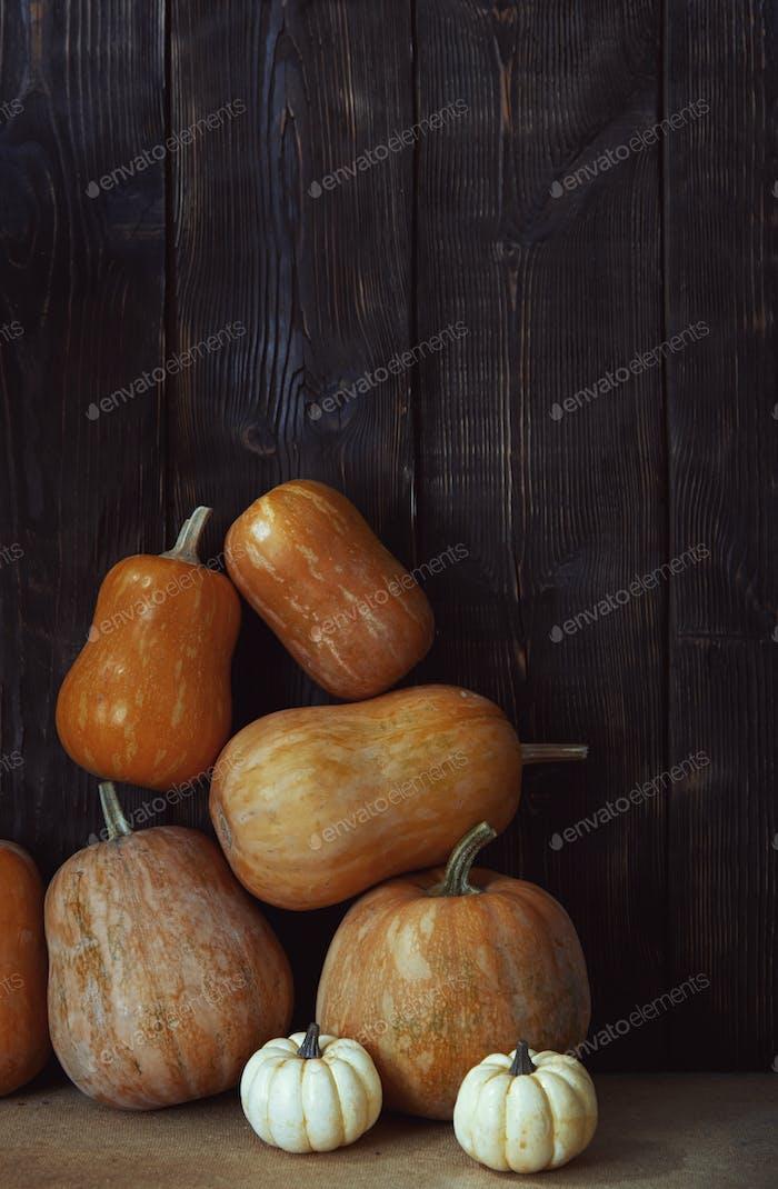Stack of pumpkins after harvesting in rural place