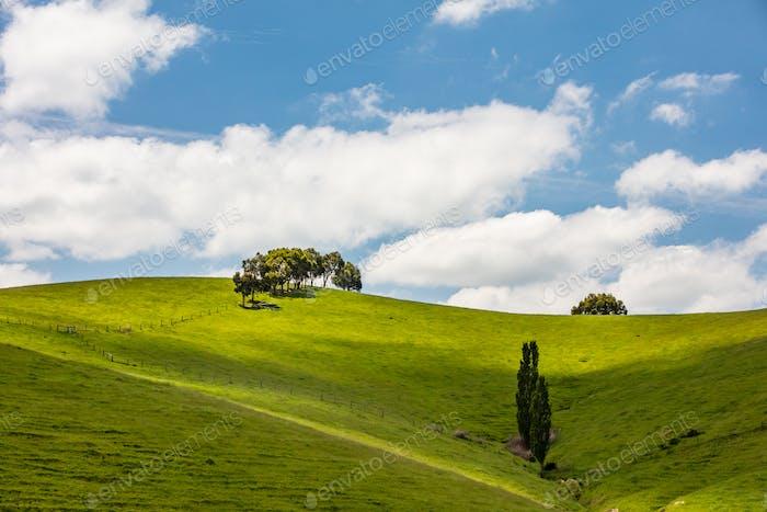 Strzelecki Ranges Landscape