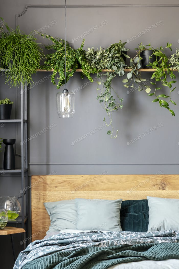 Close-up of plants on a shelf above the bed with pillows and bla