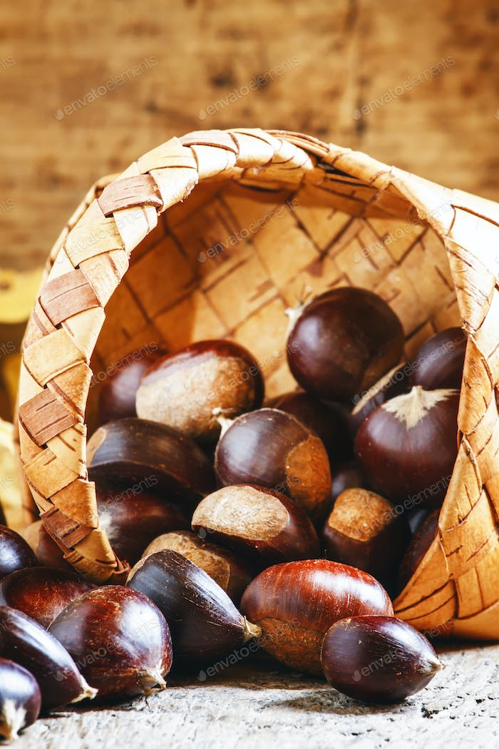 Fresh edible chestnuts spill out of a wicker basket