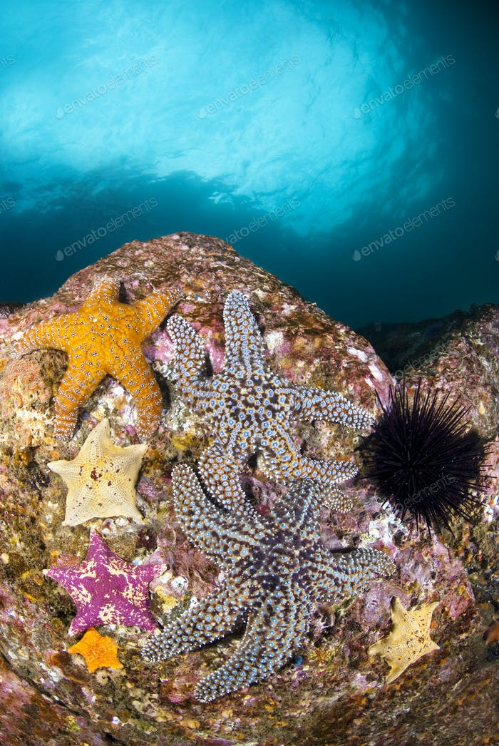 Starfish on Reef