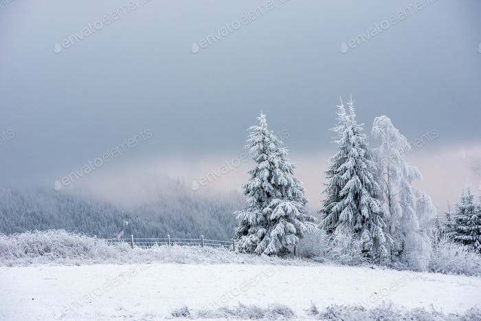 Thumbnail for Snow covered frozen trees in the mountains. Christmas time, winter holiday concept