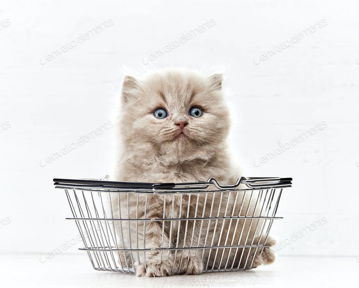маленький котенок в корзине