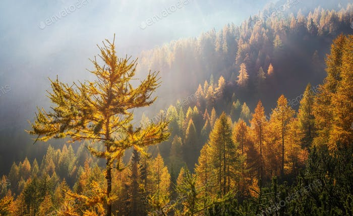 Autumn landscape scenery in the Julian Alps mountains