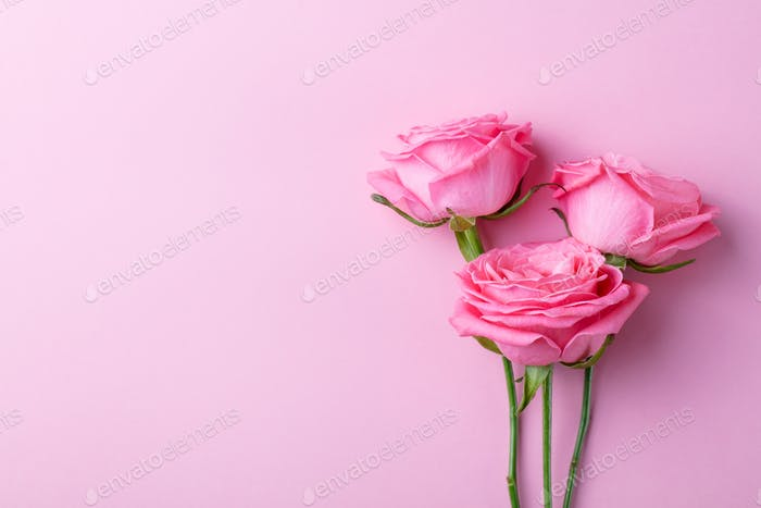 Rose Flowers on Pink Background. Top view.