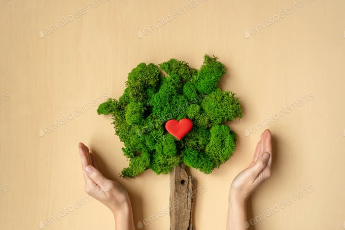 Woman's hands holding tree. Ecological concept.