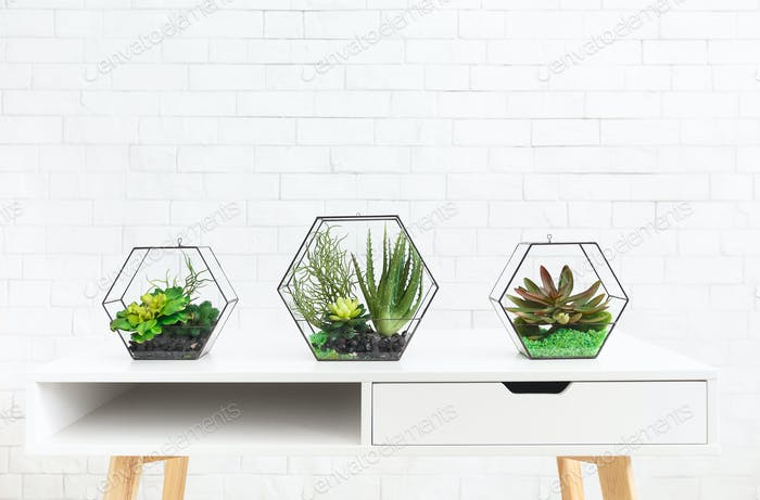 Succulent plants in florarium vases