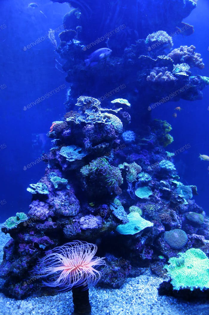 Beautiful colorful marine animals
