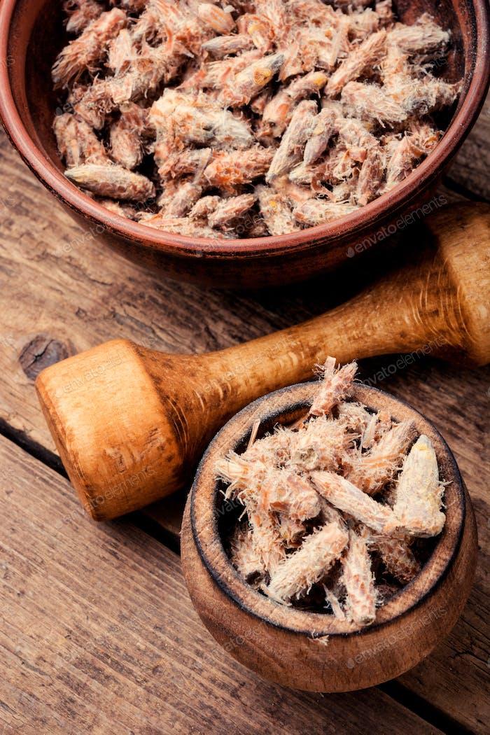 Pine buds, natural healer