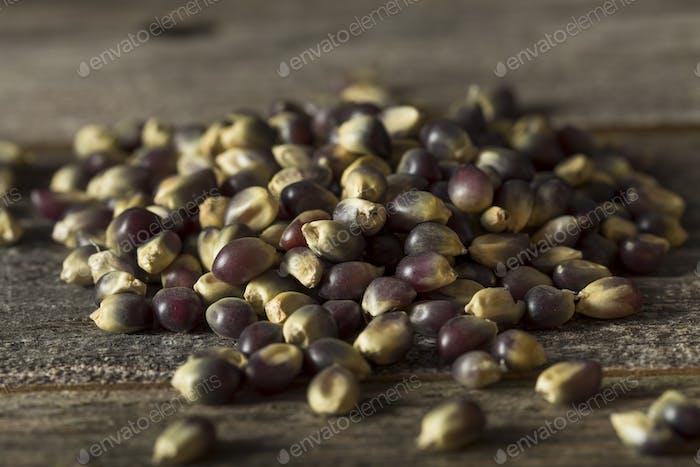Raw Organic Blue Popcorn