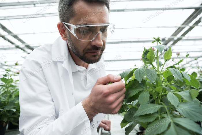 Young concentrated man standing in greenhouse