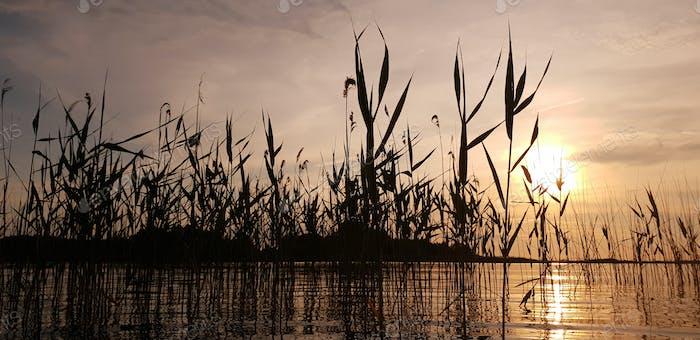 Schöne malerische Landschaft eines Sommersees