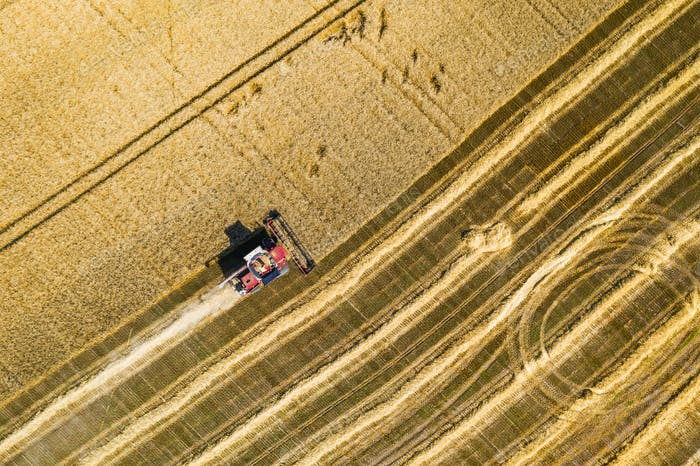 Aerial view of combine harvesters on wheat field. Industrial background on agricultural theme
