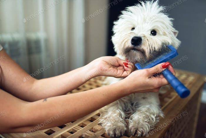Крупным планом вид расчесывания бороды белой собаки.