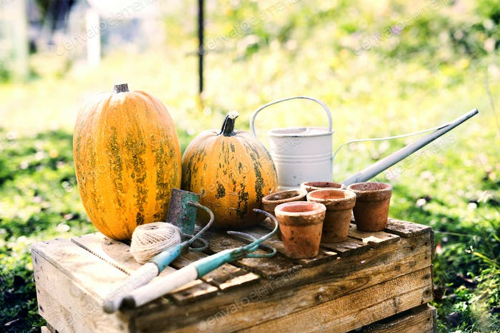 Composition of vegetables, garden tools and flower pots in the garden.