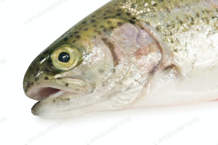 Thumbnail for trout
