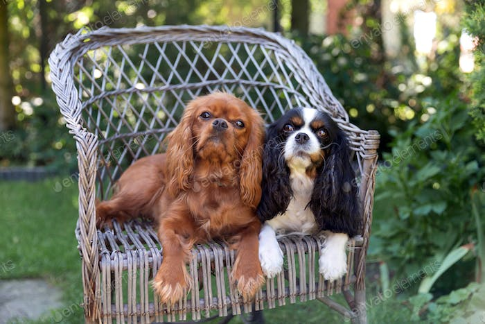Two dogs relaxing together