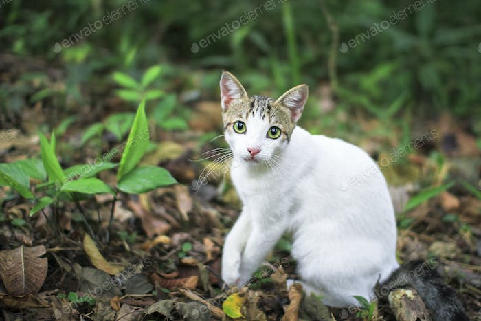 White Cat Sitting on the Jungle Floor