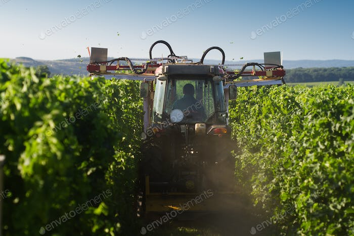 tractor trimming the vineyard in the morning