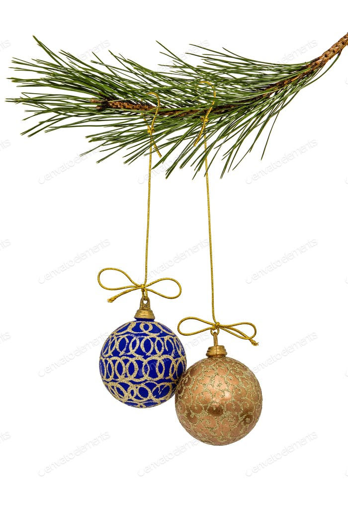 Beautiful Christmas balls hanging on branch of the pine, isolate