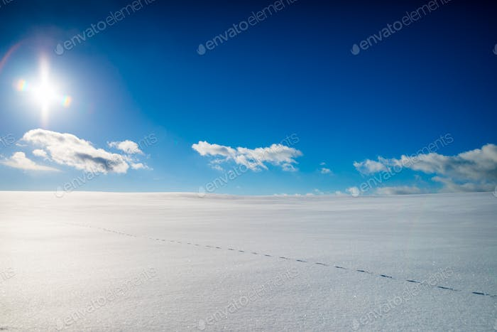 Fox Track in a Wild Large Frozen Field on a Magical Sunny Day of